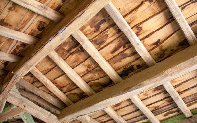 Les bonnes raisons d'utiliser les bois de construction